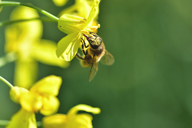 Invertebrate Insect Animal Animal Wildlife Animal Themes Animals In The Wild One Animal Flower Fragility Flowering Plant Plant Beauty In Nature Bee Growth Vulnerability  Close-up Yellow Petal Nature No People Flower Head Pollination Outdoors Pollen
