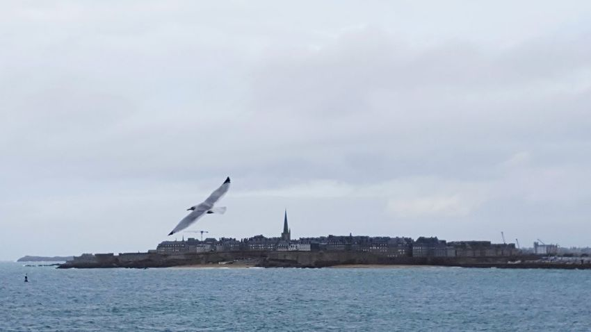 Sky No People Outdoors Nature Industry Business Finance And Industry Water Sea Nautical Vessel Day Landscape Tranquility Saint Malo Seagull