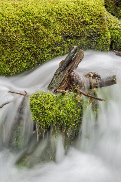Long Exposure Long Time Exposure Moss Power In Nature Power In Water River Tree Water Waterfront White White Water