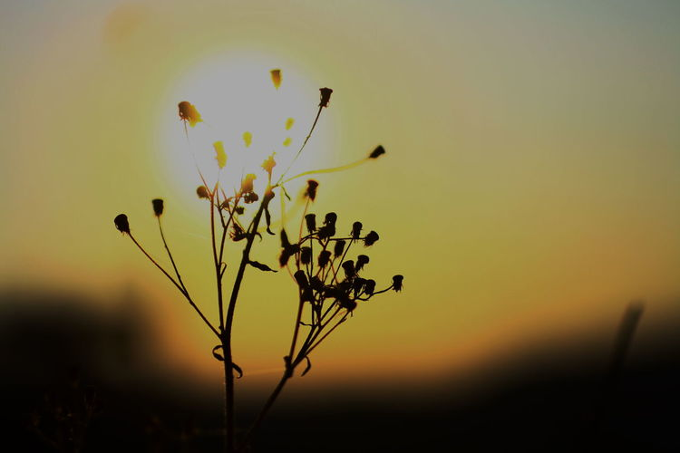 Beauty In Nature Nature Plant Plant And Sun Selective Focus Sky Sun Sunset Sunset_collection Yellow