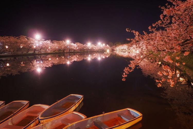 Illuminated trees by lake against sky at night