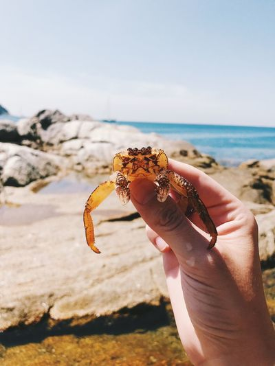 Close-up of hand holding crab on beach