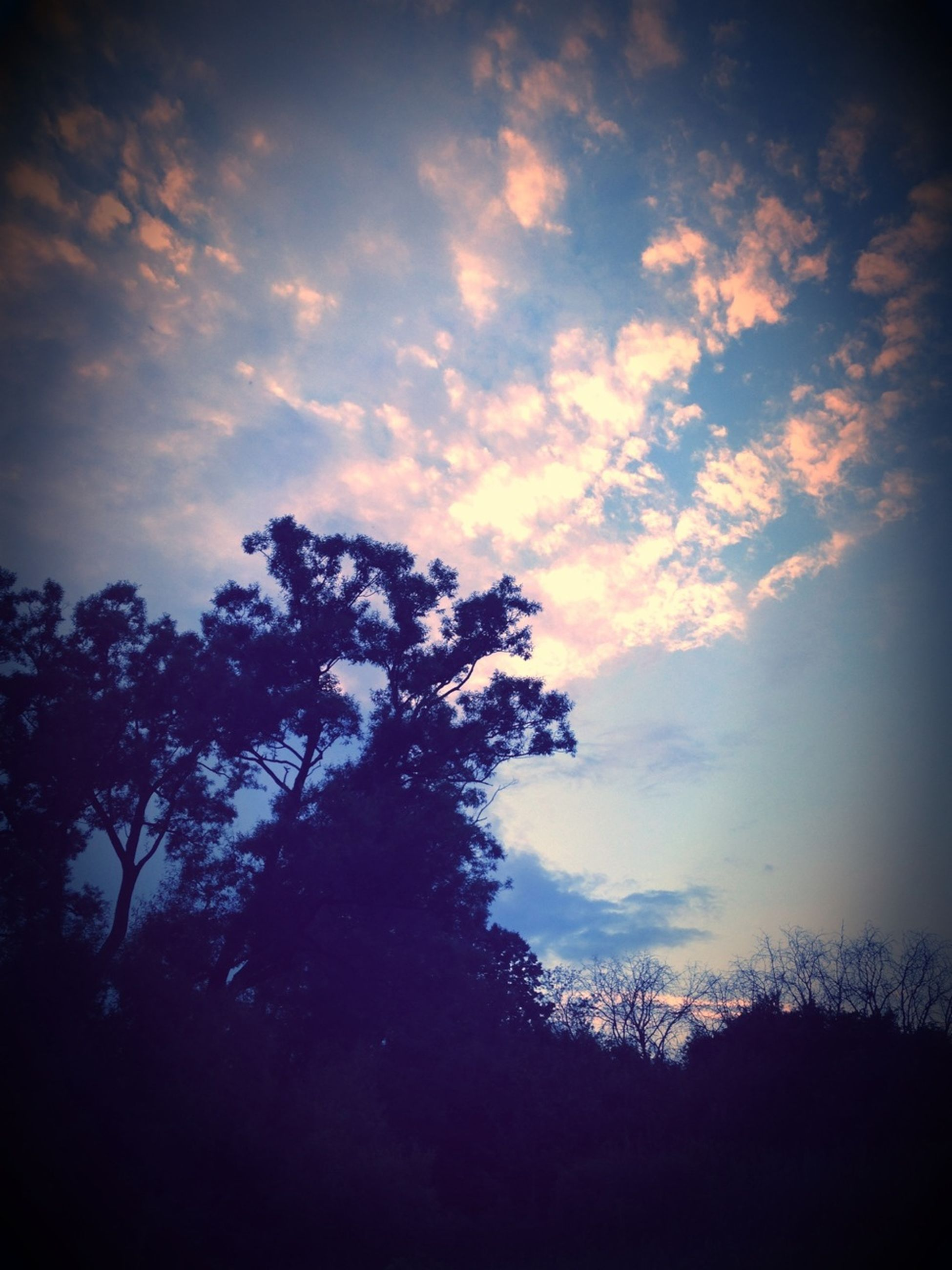 silhouette, sky, tree, tranquility, cloud - sky, beauty in nature, tranquil scene, sunset, scenics, low angle view, nature, cloudy, cloud, growth, idyllic, dusk, outdoors, branch, no people, landscape