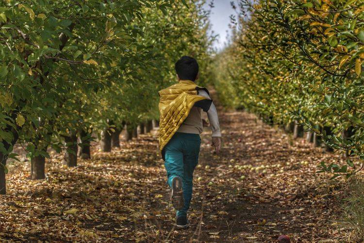 Rear View Of Boy Running On Pathway Amidst Trees