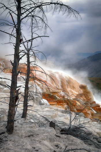 dead trees and colourful travertine terraces made of crystallized calcium carbonate in Mammoth Hot Springs, Yellowstone National Park Tree Nature Bare Tree No People Power In Nature Outdoors Hot Spring Travertine Terraces Yellowstone National Park Yellowstone Dead Tree Dead Trees Mammoth Hot Springs Area Volcanic Landscape Volcano Geothermal  Geothermal Activity Geothermal Fields Geological Formation Geology Landscape_Collection Crystallized Calcium Carbonate Tourist Attraction  Wyoming Travel And Tourism