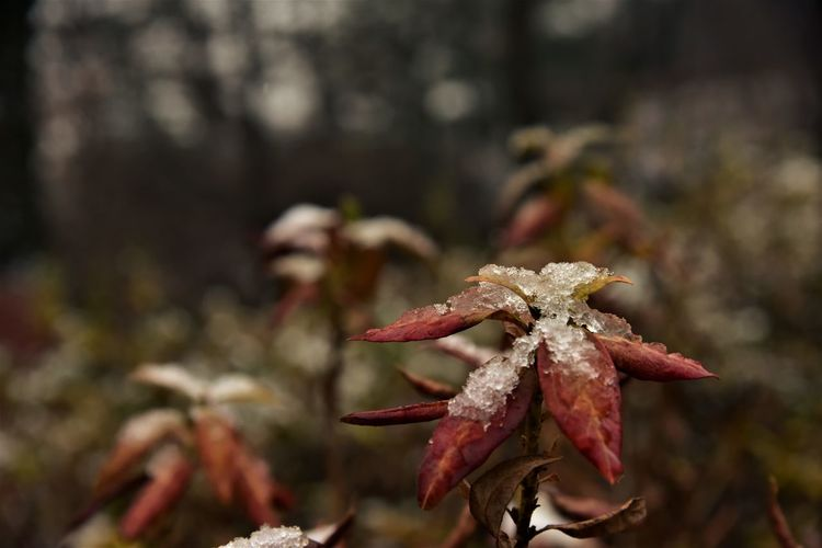 Beauty In Nature Close-up Forest Fragility Iceing Korea Photos Nature Outdoors Snow ❄