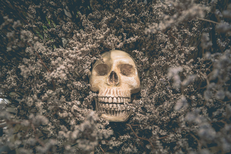 Close-up of human skull in old dried flowers
