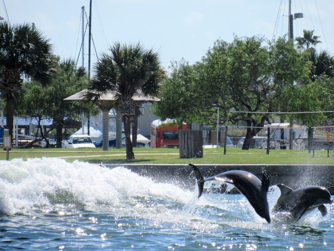 Surfing Dolphins At Play Beauty In Nature Building Exterior City Day Dolphins Green Color Motion Nature Outdoors Palm Tree Scenics Splashing Spraying Tranquil Scene Tranquility Tree Water Waterfront Wave