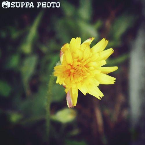 Yellow. First Eyeem Photo