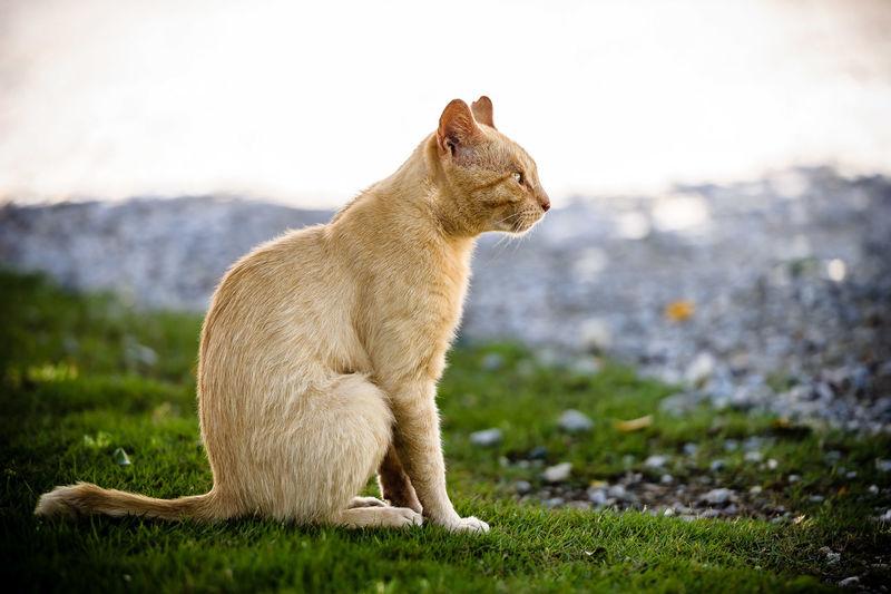 Cat sitting on grassy field against sky