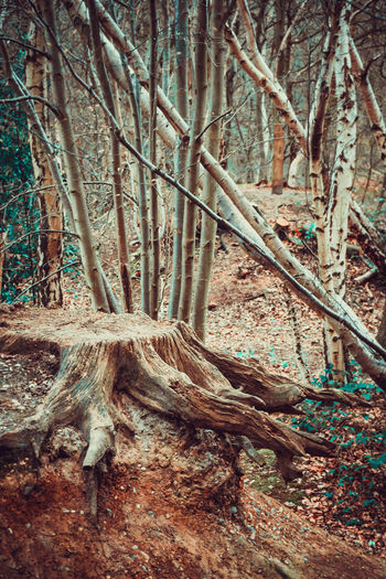Beauty In Nature Branch Creepy Roots Day Dead Tree Felled Tree Forest Just Roots Landscape Nature No People Outdoors Root Scenics Spreading Tranquil Scene Tranquility Tree Tree Trunk WoodLand