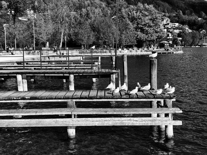 Gulls bask