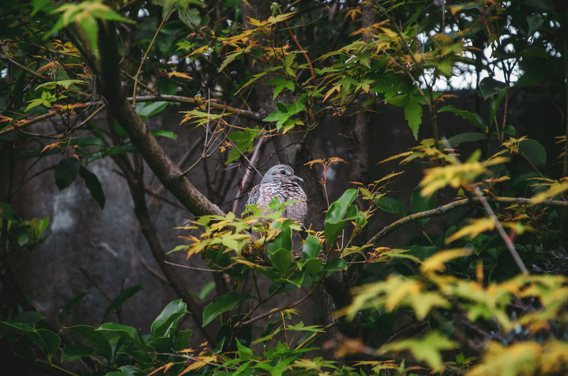 Who found who? The Serie Animal Themes Animal One Animal Plant Animal Wildlife Animals In The Wild Vertebrate Tree Bird Nature Green Color Plant Part No People Growth Perching Leaf Branch Day Land Selective Focus Outdoors Branches Branches And Leaves Dove EyeEm Nature Lover