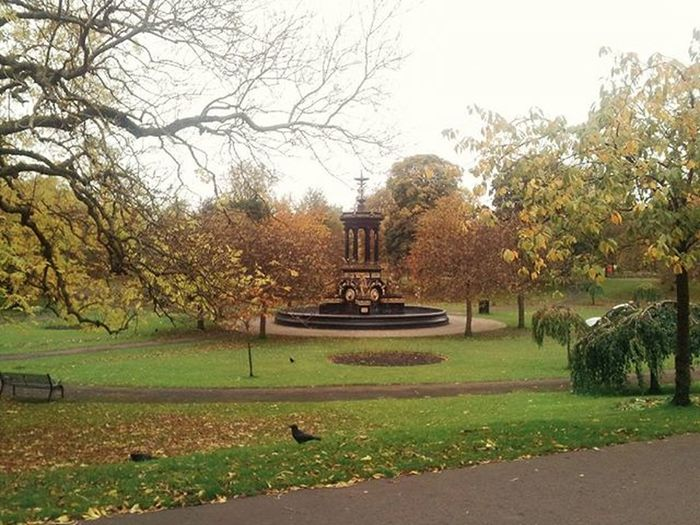 Autumn in the park... AlexandraPark Dennistoun Glasgow  Ig_glasgow Instaglasgow Igersglasgow Igersscot IgersScotland Insta_Scotland Instascotland Vscocam VSCO Vscotland VisitScotland Explorescotland Instagood Picoftheday Instaoftheday Autumn