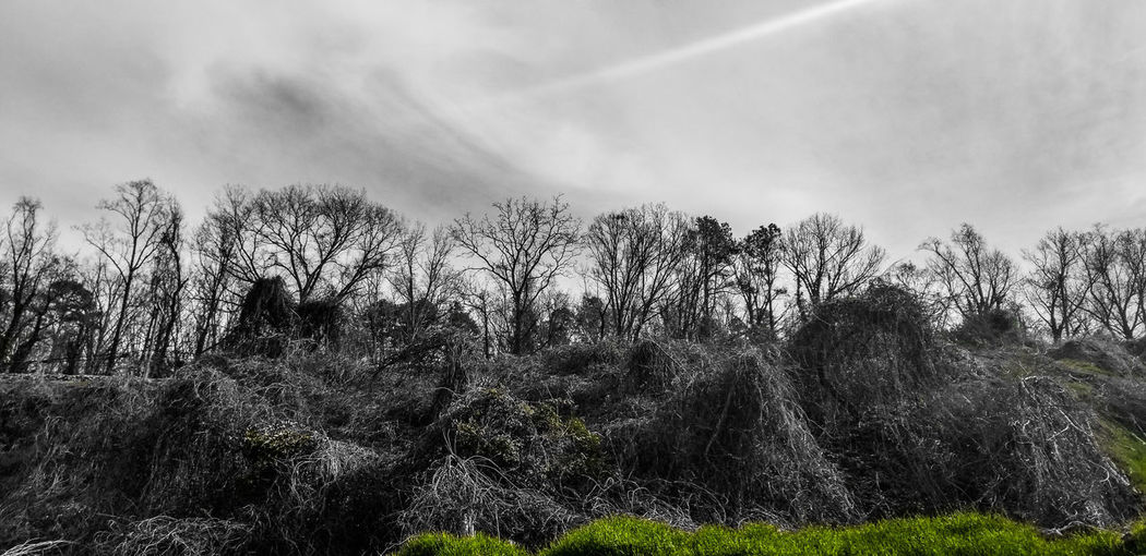 This is my life! Green Treelovers Sky Treeandsky No People Nature Tree Sky Growing Cloud - Sky Overcast My Best Photo