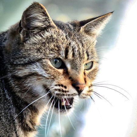vee mesai biteerr? Benimkadrajim Tr_kadraj Turkishfollowers Anıyakala Gununkaresi Walking Around Cat♡ Kedi Aşkı Kediseverler