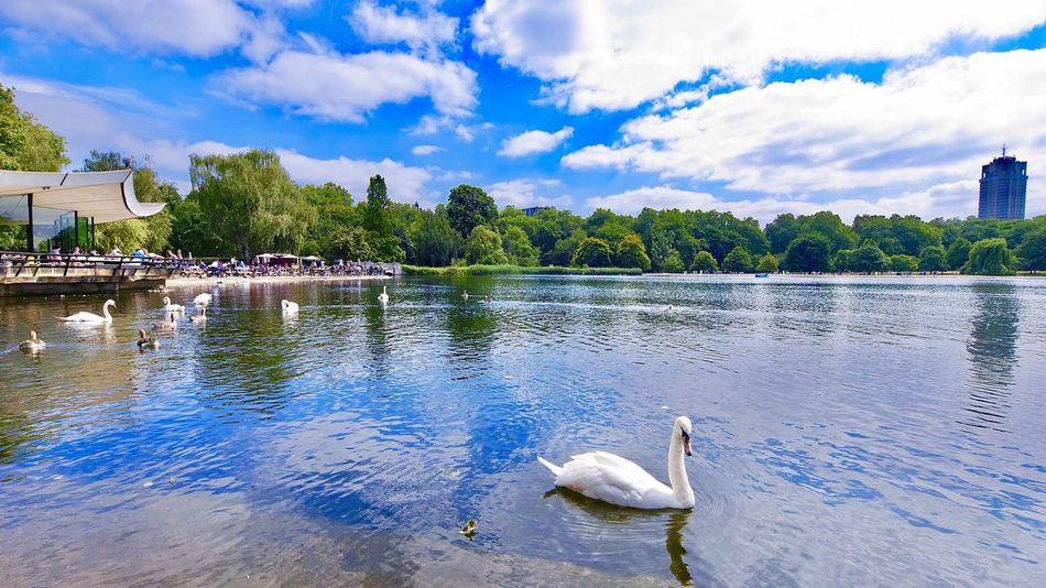 Hyde Park Water Cloud - Sky Animal Bird Sky Animal Themes Vertebrate