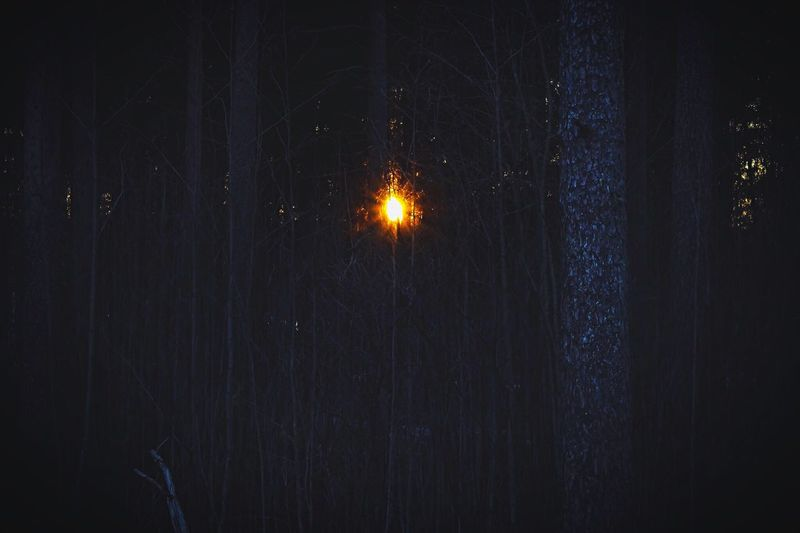 Night Illuminated No People Outdoors Nature Scenics Beauty In Nature Sky Finland Relax Canon Amazing Nature Sunset Forest Photography Nature Equilibrium Of Life Live Inspirational Thinking Trees Walk In The Woods