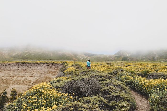 into the mist Coast Walks USA Califonia Land Field Landscape Sky One Person Environment Tranquility Nature Fog Tranquil Scene Outdoors Scenics - Nature
