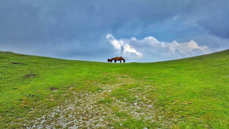 Domestic Animals Animal Themes Grass Green Color Sky Blue Landscape Livestock One Animal Field Horse Hill Tranquility Tranquil Scene Full Length Grassy Pasture Mammal Cloud - Sky Nature Horse Peace Nature Photography Danieledonofrio