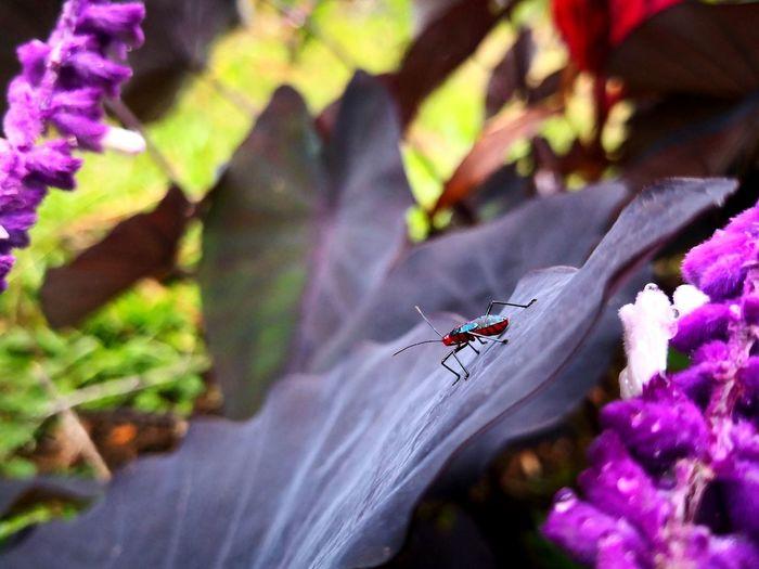 Small bug