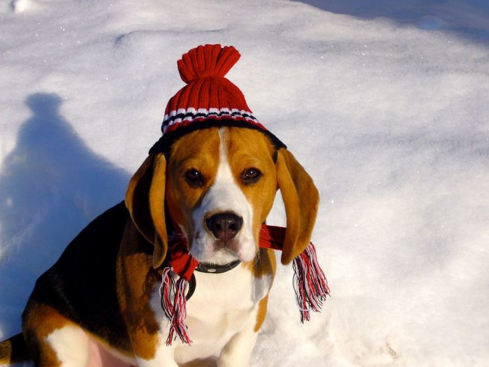 Christmas Animal Themes Beagle Beaglelife Beaglelovers Close-up Day Dog Domestic Animals Looking At Camera Mammal Nature No People One Animal Outdoors Pets Portrait Sky Snow