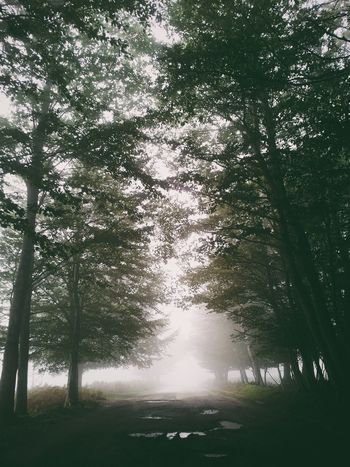 Melancholic Landscapes Fog In The Trees Shootermag Eyem Best Shots