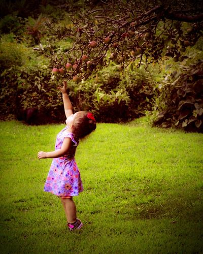 Innocence One Person Apple Tree Nature Beauty In Nature Childhood Family Determination Child Moments Reaching Beautiful Fragile Memories Floral Dress Bun Apple Tree Little Girl Love Forever Young WILLPOWER Outdoors Close-up EyeEm Selects The Week On EyeEm The Week On EyeEm