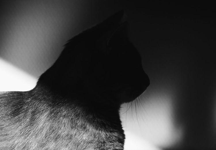 Cat Morning