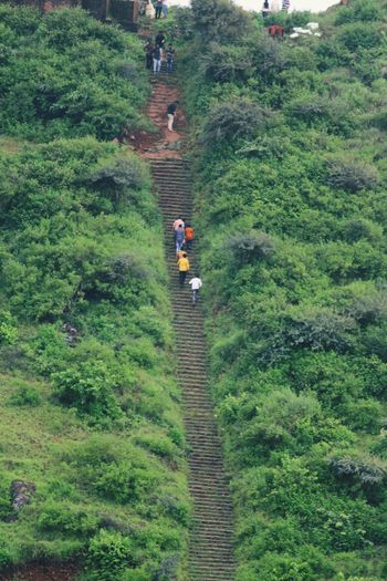 Tea Crop Men Tree Women Agriculture Field Togetherness High Angle View Rural Scene Walking Pathway Agricultural Field Walkway Green Treelined Grassland Young Plant Greenery Cultivated Land Countryside