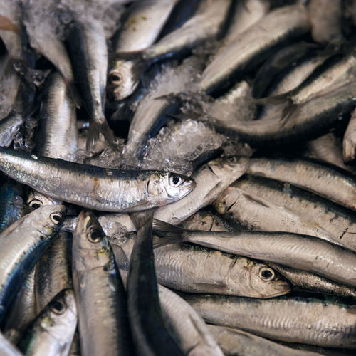 Fresh Sardines Abundance Backgrounds Close-up Day Fish Fish Market Food Food And Drink Freshness Full Frame Healthy Eating Large Group Of Animals Large Group Of Objects Market No People Outdoors Raw Food Retail  Sardines Seafood