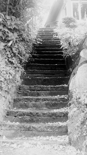 Steps And Staircases Steps Outdoors Stairs Staircase Low Angle View Plant No People