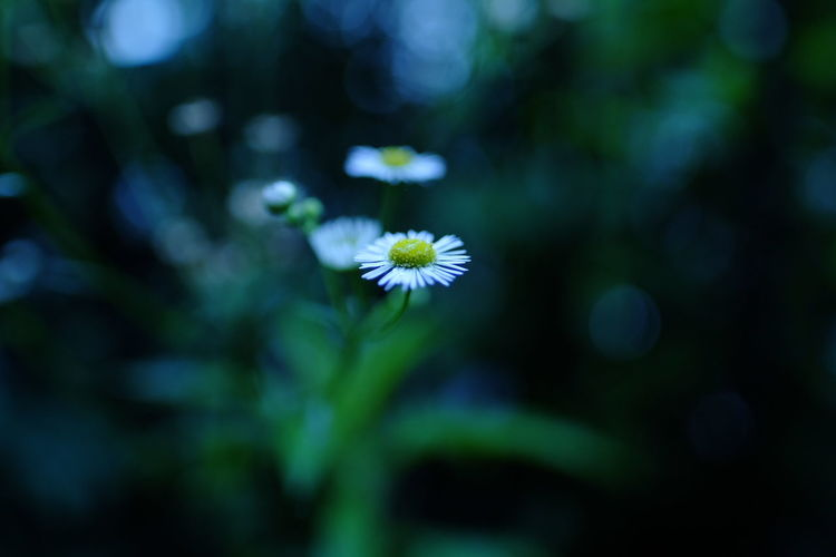 I'm terribly sorry I'm not able to reply to you./返信できなくてごめんなさい😢 Little Flowers Flowerporn Flower Fantasy EyeEm Flower EyeEm Nature Lover Depth Of Field FUJIFILM X-T10 Pro Neg. Hi The Minimals (less Edit Juxt Photography) XF16mmF1.4