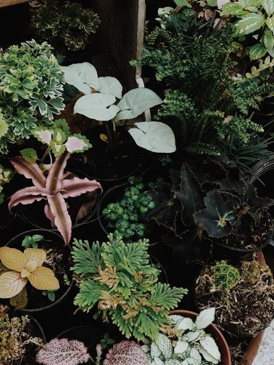 High angle view of potted plants in garden