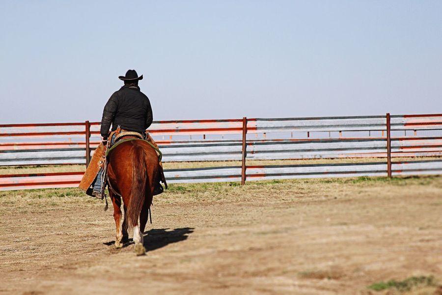 Texas Cowboy Horse