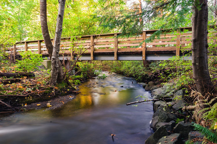 Long exposure of bridge over creek in autumn Autumn Bridge Over Creek Bridge Over Stream Bridge Over Water Creek Beauty In Nature Bridge Bridge - Man Made Structure Day Fall Forest Growth Long Exposure Nature No People Outdoors River Scenics Stream Streamzoofamily Tranquil Scene Tranquility Tree Water