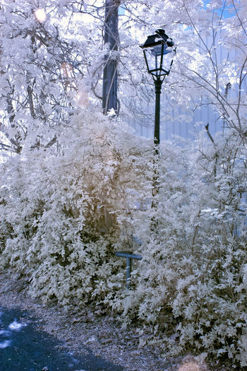 Snow covered plants by street during winter