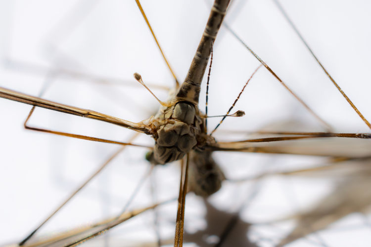Close-up Focus On Foreground Selective Focus No People Day Animals In The Wild Insect Nature One Animal Plant Invertebrate Outdoors Animal Animal Wildlife Animal Themes Brown Stick - Plant Part Plant Stem Dry Tree Gnat Mosquito Dead