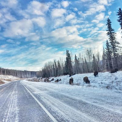 What a drive! • TstNow Stunning views, dodging Bison and plunging into a refreshing hot spring. Making my way back to Edmonton one day at a time :-) • Tstcanada with @explorecanada • Explorecanada Travel Roadtrip •