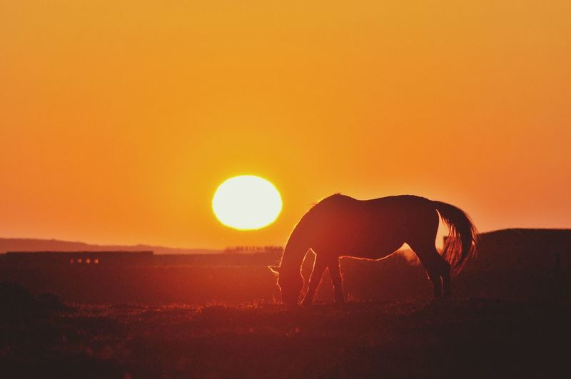 Silhouette of horse on field against orange sky