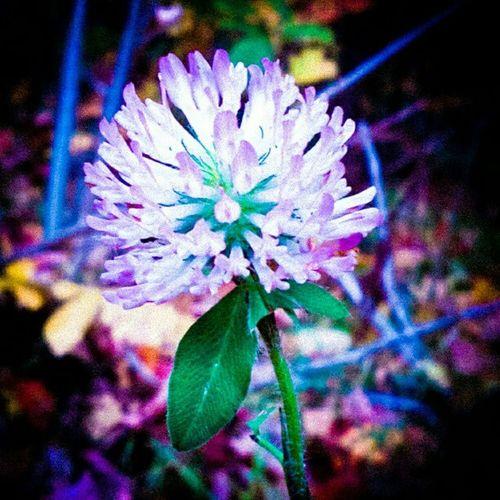 #flower #in #autum #beaatiful #colours #purple #green #pink # yellow In Pink Colours Purple Autum Beaatiful Flower Green