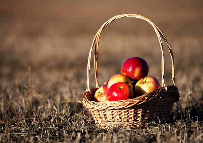 Aple Aples Apple - Fruit Autumn Basket Close-up Day Food Food And Drink Food Photography Freshness Fruit Grass Healthy Eating No People Outdoors