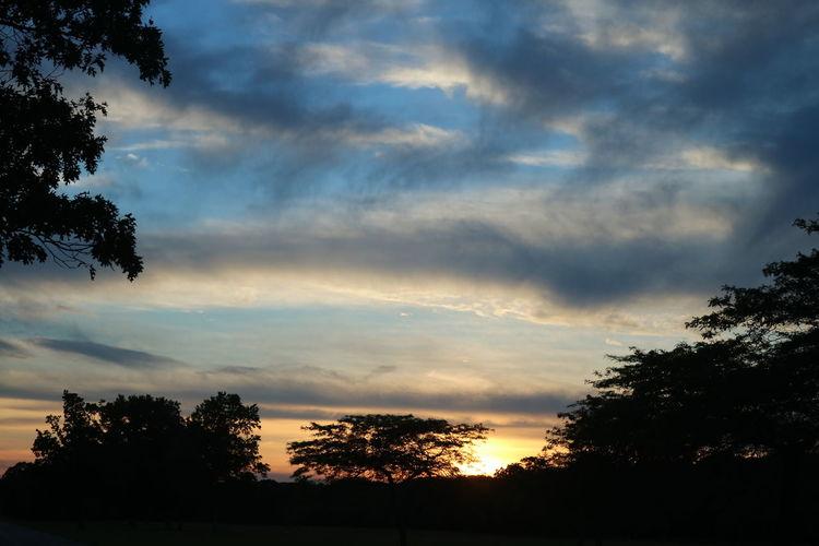 Landscape_Collec