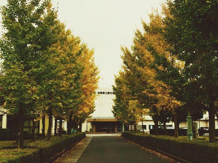 愛知高校の校庭前ですが毎年のことながら秋の風流な光景です。自分の高校時代を思い出しますね。う〜ん、20年以上前ですがこの景色は変わりません。😄👌
