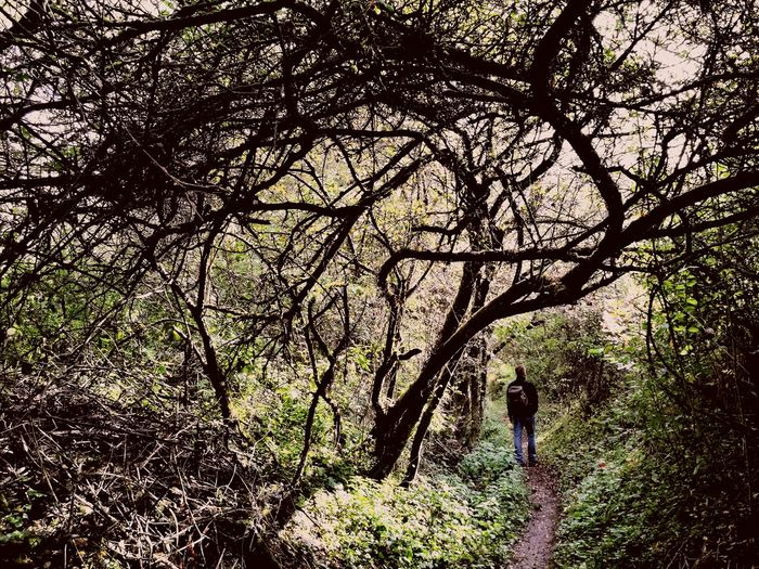 Lost In The Landscape Outdoors Beauty In Nature Forest Hikingtrail Hiking Trails Hiking Adventure Hiking Adventures Hiking Pictures Summer Sports