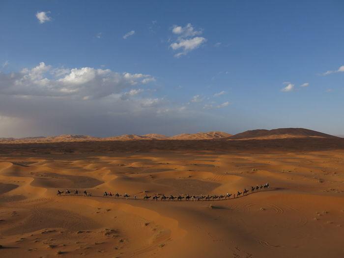 Camels Walking On Desert Against Sky