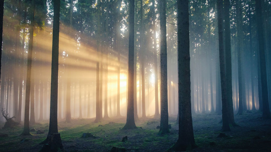 Foggy Sunrise Foggy Weather Grass Growth Shades Of Winter Sunrise Silhouette Taunus Highlands Tranquil Tranquility Beauty In Nature Day Fog Foggy Morning Forest Landscape Nature No People Outdoors Scenics Sunrise Sunrise_sunsets_aroundworld Tranquil Scene Tree Tree Trunk