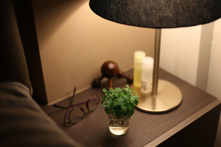 Close-up of houseplant by illuminated lighting equipment on night table at home