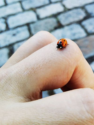 Cropped image of ladybug on hand