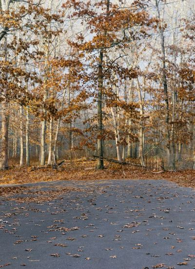 Winter oak tree Woods Forest Leaves Winter Fall Tree Plant Nature Tranquility Road Day Autumn No People Beauty In Nature Land Tranquil Scene Scenics - Nature Non-urban Scene Outdoors Sunlight Environment Idyllic Change